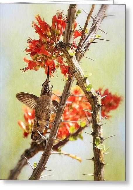 Ocotillo Cactus Greeting Cards - Things are Looking Up  Greeting Card by Saija  Lehtonen