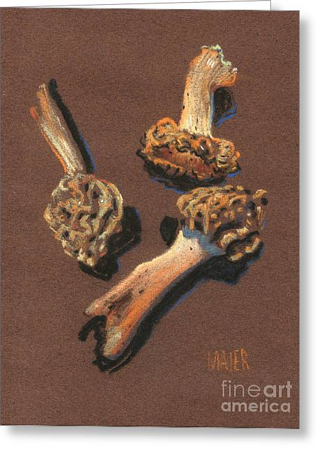 Vegetables Pastels Greeting Cards - Three Morels Greeting Card by Donald Maier