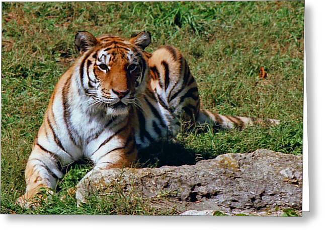 Tiger II Greeting Card by Gary Adkins