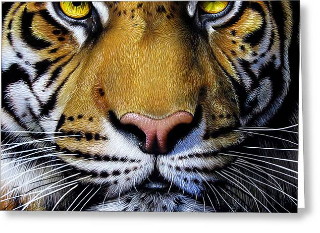 Asian Tiger Greeting Cards - Tiger Greeting Card by Jurek Zamoyski
