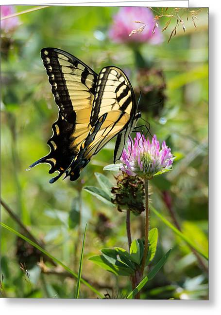 The Tiger Greeting Cards - Tiger Swallowtail Butterfly Greeting Card by Jan M Holden