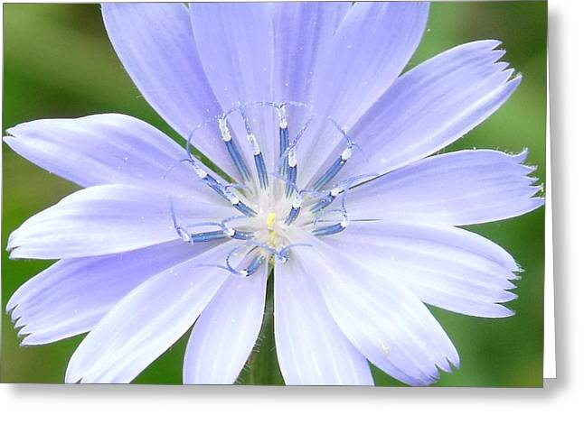 Indiana Flowers Digital Art Greeting Cards - Tiny Dancers Greeting Card by Ed Smith