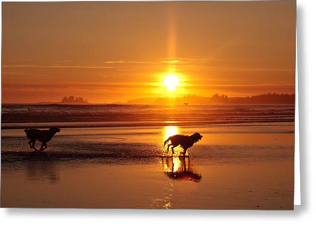 Dog Play Sea Greeting Cards - Tofino Sunset 1 Greeting Card by Xin Cheng