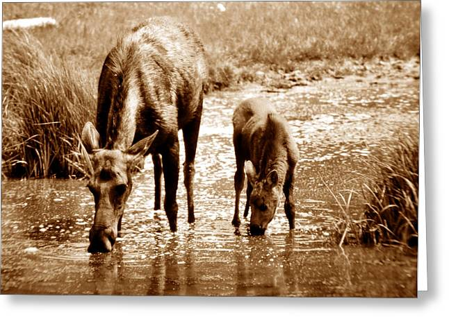 Yearling Greeting Cards - Together Greeting Card by David Lee Thompson