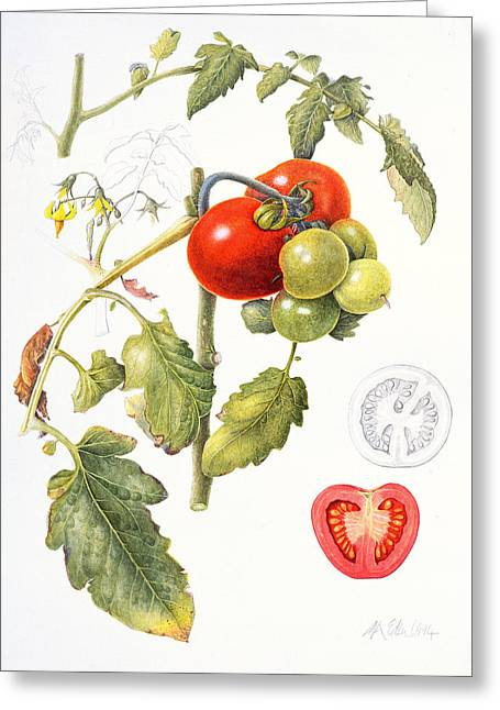 Tomatoes Greeting Card by Margaret Ann Eden
