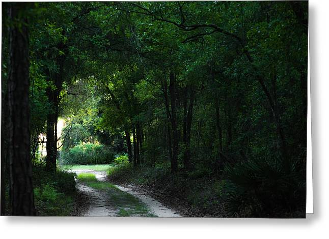 Jogging Greeting Cards - Trail of Dreams Greeting Card by Shelby  Young