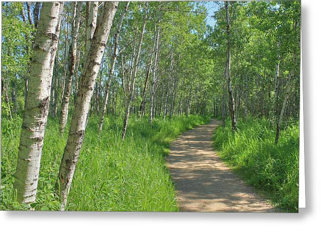 Jogging Greeting Cards - Trail Through Aspens Greeting Card by Jim Sauchyn