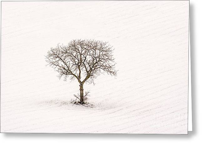 Snow-covered Landscape Photographs Greeting Cards - Tree isolated in winter. Auvergne. france Greeting Card by Bernard Jaubert