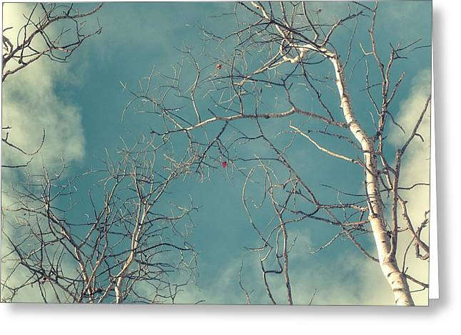 Bare Trees Greeting Cards - Tree Tops 4 Greeting Card by Priska Wettstein