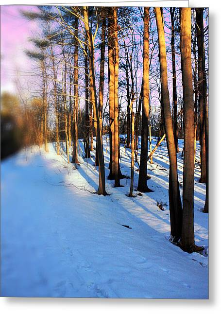Snow Tree Prints Digital Greeting Cards - Trees Photography Greeting Card by Mark Ashkenazi