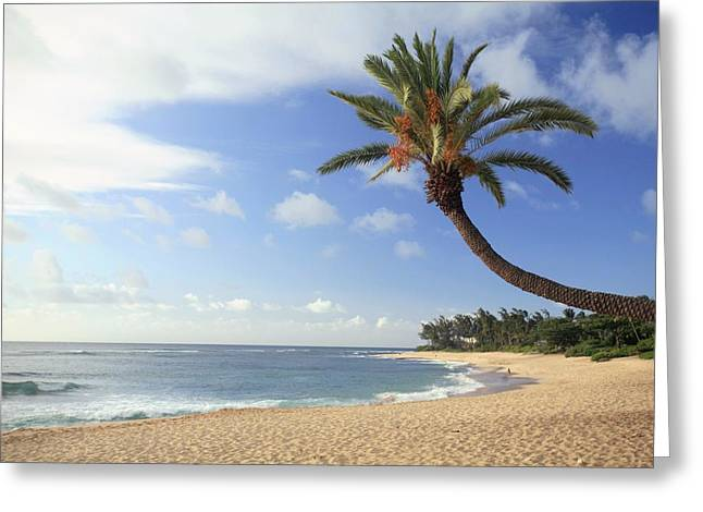 Hawaiian Paradise Park Greeting Cards - Tropical Beach Greeting Card by Michael Szoenyi