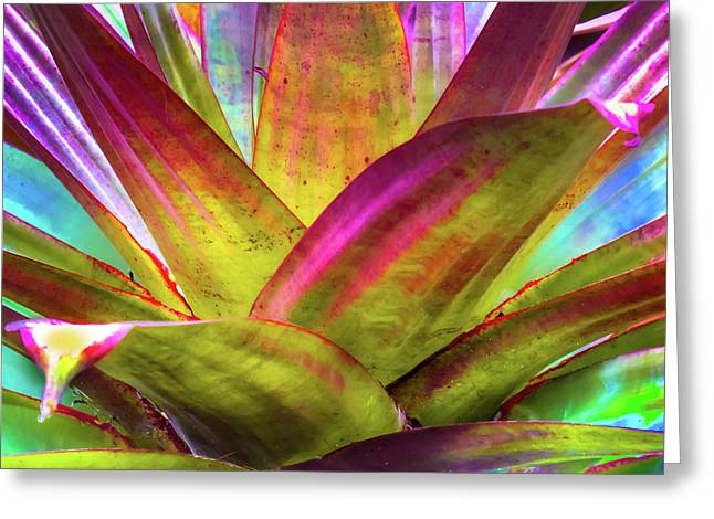 Tropicana Greeting Card by Karen Wiles