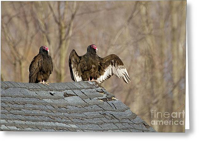 Red Roofed Barn Greeting Cards - Turkey Vultures On Roof Greeting Card by Marie Read