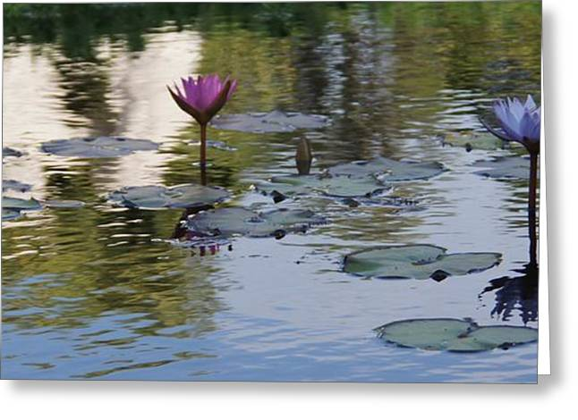 Water Lilly Greeting Cards - Twins Greeting Card by David and Lynn Keller