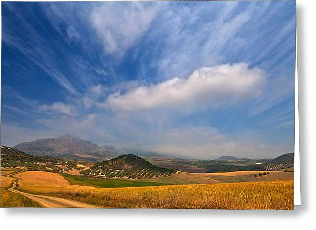 Olive Grove Greeting Cards - Twisty Road, Near Casabermeja, Malaga Greeting Card by Panoramic Images