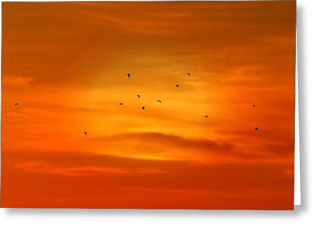 Upon A Sunset Flight Greeting Card by Angie Tirado
