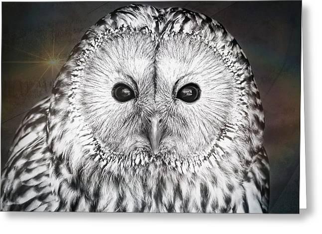 Pretty Brown Eyes Greeting Cards - Ural owl Greeting Card by Tom Gowanlock