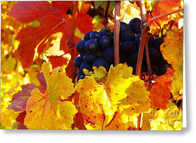 Vineyard 16 Greeting Card by Xueling Zou