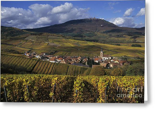 Haut Greeting Cards - Vineyard In Alsace, France Greeting Card by Jean-Louis Klein & Marie-Luce Hubert