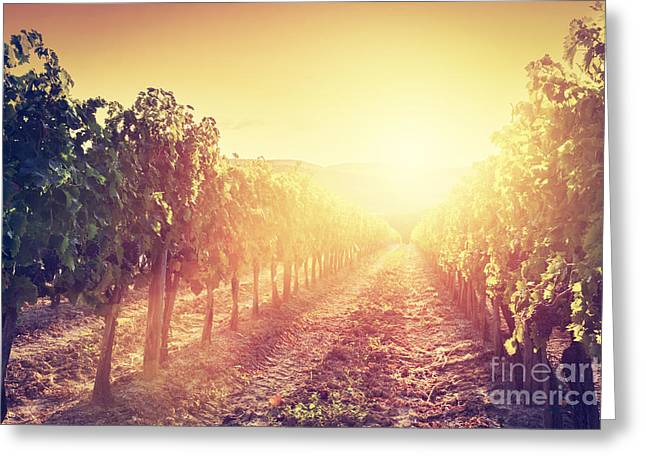 Vineyard Landscape In Tuscany Greeting Card by Michal Bednarek