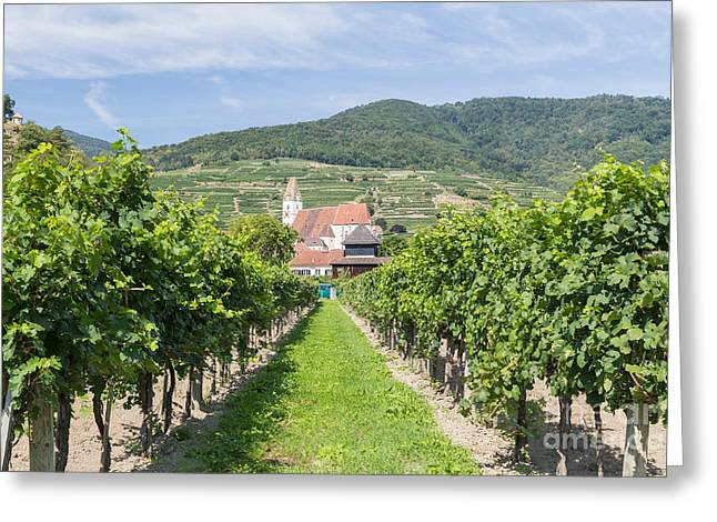 Blue Grapes Greeting Cards - Vineyards and buildings in Krems, Austria Greeting Card by Mike Clegg