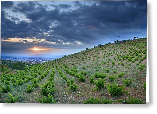 Greeting Cards - Vineyards Greeting Card by Guido Montanes Castillo