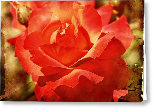 Rose Red City Greeting Cards - Vintage Rose Greeting Card by Cathie Tyler