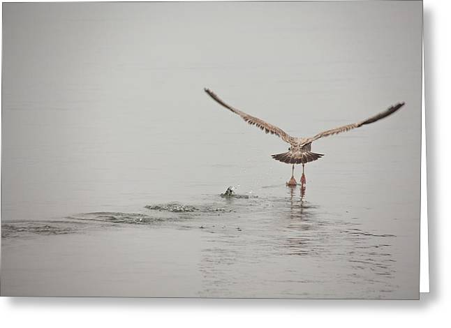 Walking On Water Greeting Cards - Walking On Water Greeting Card by Karol  Livote