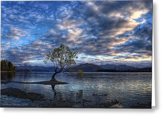 Willow Lake Greeting Cards - Wanaka Willow Sunrise Greeting Card by Victoria Porter