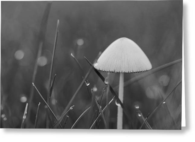 Moist Greeting Cards - Water Drops And Mushroom Greeting Card by Aaron Burden