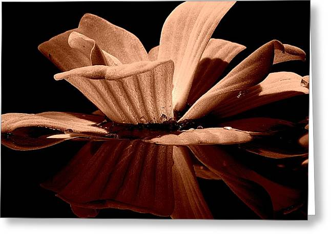 Aquatic Greeting Cards - Water Lettuce #05 Greeting Card by Ninie AG