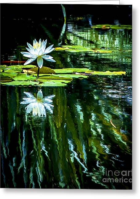 Day Lilly Greeting Cards - Water Lilly Greeting Card by Rich Governali
