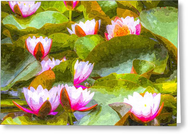 S Lily Greeting Cards - Water Lily Art Greeting Card by David Pyatt