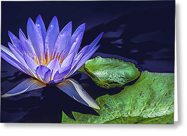 Water Lily In Lavender Greeting Card by Julie Palencia