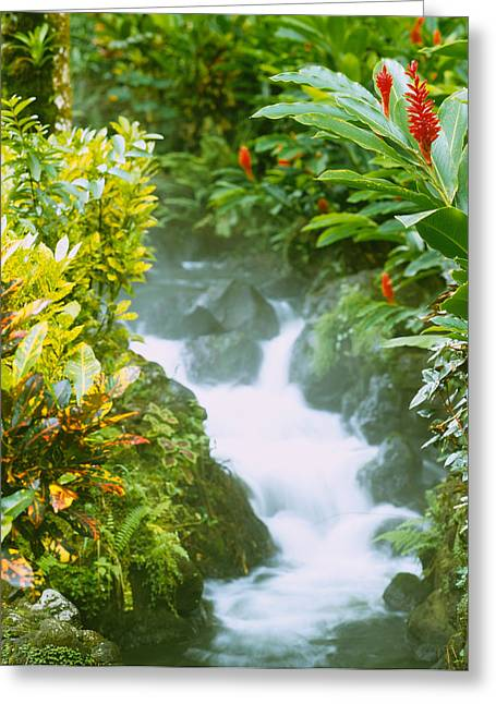 Waterfall In A Forest, Tabacon, Costa Greeting Card by Panoramic Images