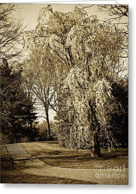 Oriental Weeping Cherry Tree Wall Art Greeting Card by Carol F Austin