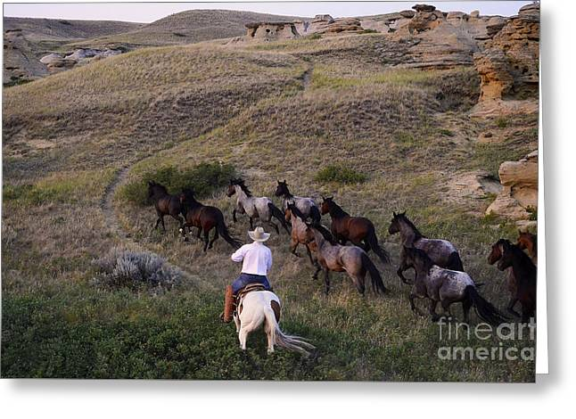 Alberta Landscape Greeting Cards - Western Living 1 Greeting Card by Bob Christopher