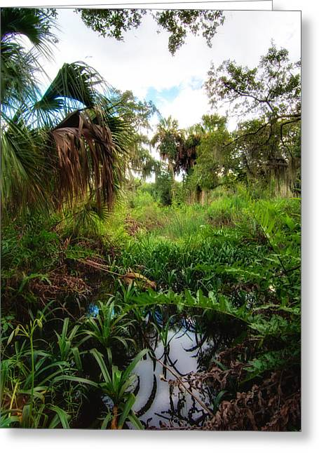 Watershed Greeting Cards - Wetlands of Terra Ceia Preserve  Greeting Card by Rich Leighton