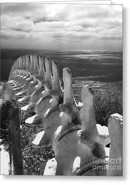 Whale Bones In Black And White Greeting Card by Gregory Dyer