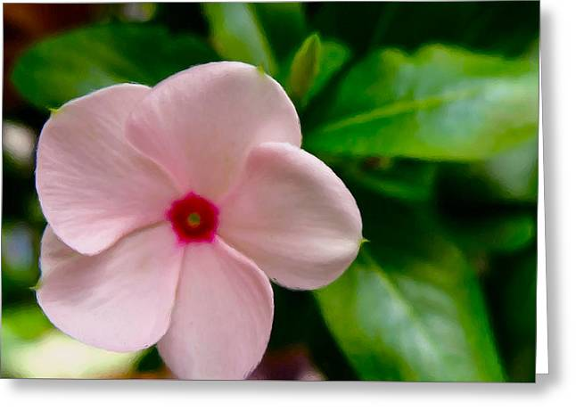 Watercress Greeting Cards - White Periwinkle flower 1 Greeting Card by Lanjee Chee