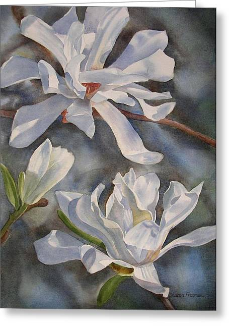 White Flowers Paintings Greeting Cards - White Star Magnolia Blossoms Greeting Card by Sharon Freeman