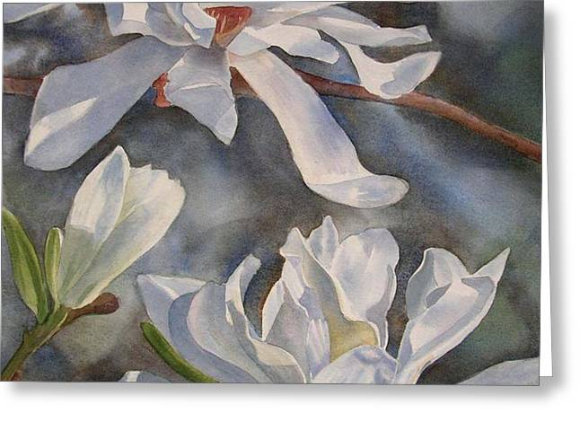 White Star Magnolia Blossoms Greeting Card by Sharon Freeman