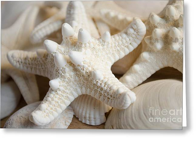 Shell Texture Greeting Cards - White starfish Greeting Card by Andrea Anderegg