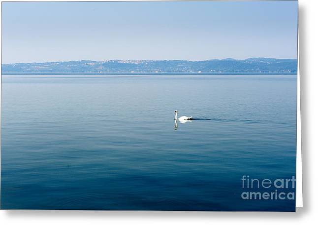 Haze Greeting Cards - White swan swims on a lake in haze morning Greeting Card by Fabio Pagani