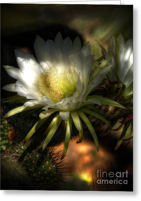 White Cactus Flower Greeting Cards - White Torch Cactus Flowers  Greeting Card by Saija  Lehtonen