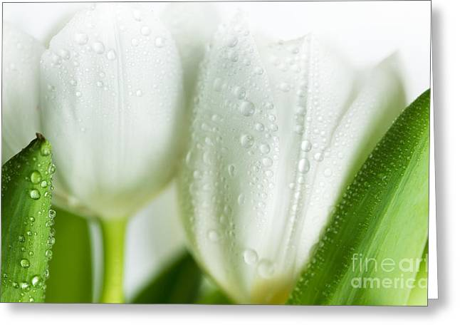 Pretty Photographs Greeting Cards - White Tulips Greeting Card by Nailia Schwarz