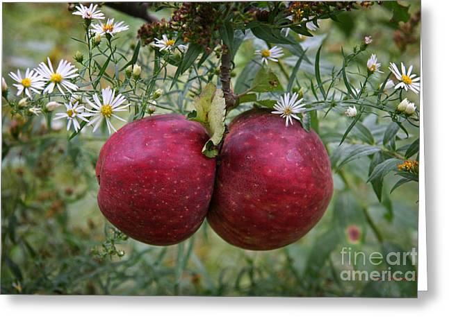 Wild Apples Greeting Card by John Stephens