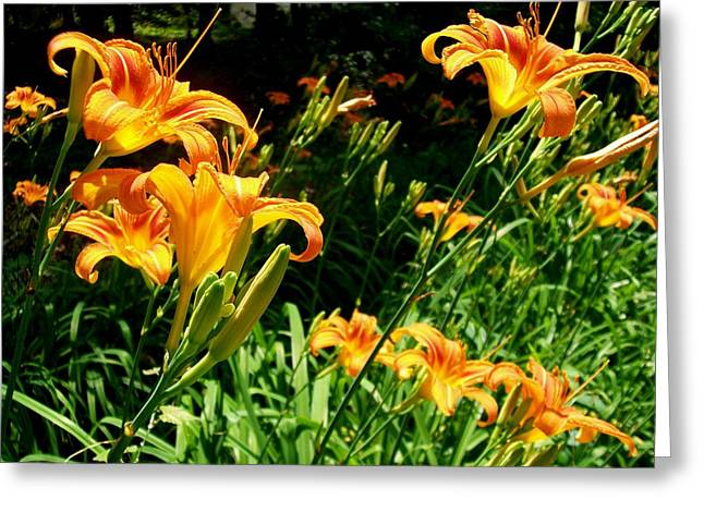 Nature Phots Greeting Cards - Wild Flowers Greeting Card by Fareeha Khawaja