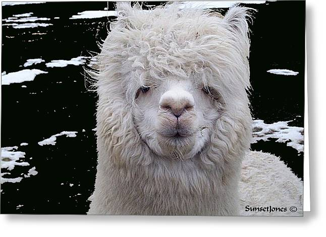 Alpacas Greeting Cards - Wild Life Greeting Card by Robert Orinski