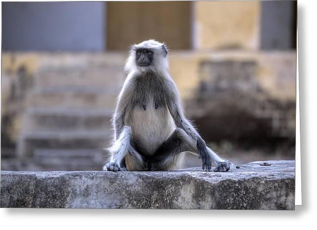 wild monkey in Rajasthan - India Greeting Card by Joana Kruse